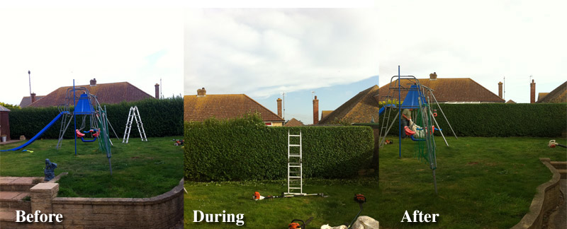 how to cut a hedge in half
